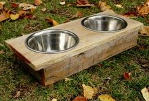 Pets / Dogs and Cat Goodies / by Urban Garden Workshop