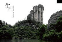 Wuyi Rock tea / all top class Wuyi rock tea origin from Fujian Wuyishan mountain