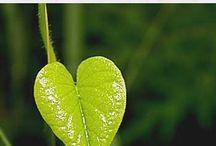 Heilkräuter für die Liebe