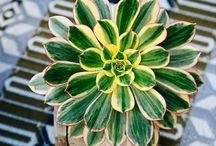 botanica/plantas/flores