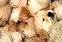 warm fuzziness / by Kristen Ohlendorf Darr