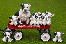 Pit Bull Stuffed Animal Plush Toys / Pit Bull Stuffed Animals and Plush Toys