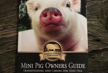 Mini Pig Store