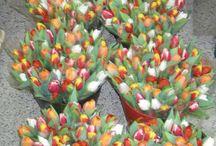 Tulipány - Tulips - Тюльпаны / Tulipánová sezona právě začíná. Objednejte si svoji kytici