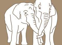 Elephant Haven / Elephant Haven