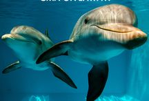 Deals, Giveaways and Events / Exclusive Clearwater Marine Aquarium deals, giveaways and event information.  / by Clearwater Marine Aquarium