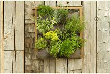 Gardening ideas / by Robin Barnes