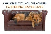 Be A Hero...Foster / Fostering helps us continue to rescue dogs who are homeless and at-risk. It's a big responsibility, but it's a huge help – it truly saves lives.