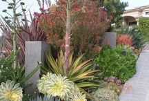 Xeriscaping / Want a low-water garden? Xeriscaping is your answer. Learn how to create beautiful desertified landscapes.
