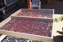 Fruitdrying