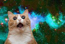 Cats in Space / self explanatory :) #sayroom