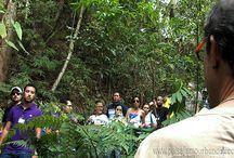 Curso de jardines verticales en México 2012