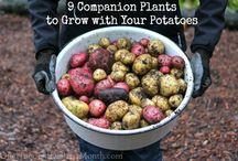 Grow Your Eco Food