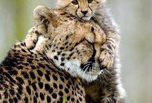 lief / katten