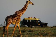 Giraffe...cuz they're awesome / by Ciara Lippard