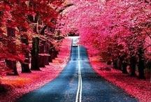 Photo цветные наложение