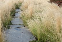 Grasses / Ideas