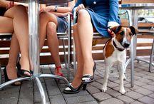 Pet friendly restaurants