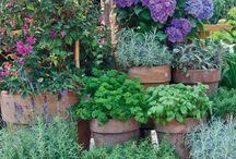 bilinkova  zahrada
