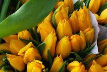 Tulips, my favourite..