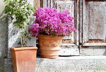 Italian Garden Pot Pleasure