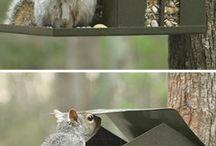 ekorn og fuglematere