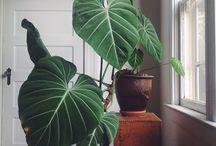 indoor plant beauties