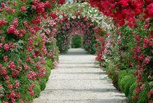 Kouzelné zahrady