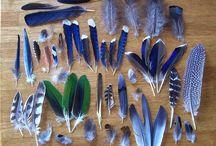 veren.....feathers