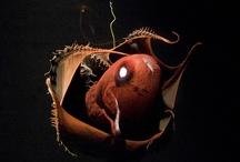 Nature - Deep Sea Creatures