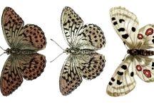 UHK Gallery - butterflies