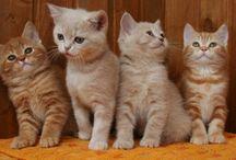 Кошки (Cats)