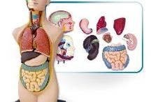 Medicinske skripte / Skripte za studente medicine, stomatologije, farmacije....testovi, kolokvijumi, skripte, sheme, knjige, slike, atlasi, predavanja....