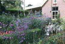Tuin en plantenborders
