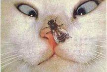 Lustige Tierbilder / Lustiges über Tiere - Funny Animals