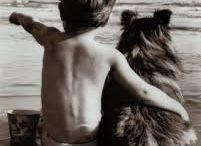 állatok és gyerekek