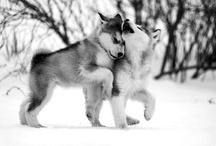♥ Animals  / Overload of cuteness