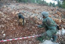 MLI in Lebanon / Lebanon is contaminated by mines and explosive remnants of war as a result of civil war and ongoing conflict with Israel.Since 2001, MLI has donated 23 mine detection dogs and training to the Lebanese Armed Forces Engineer Regiment. The dogs have searched mine-contaminated areas and helped return land for infrastructure development and agricultural use.