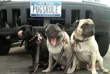 Pug Life <3 / by Kristin Reid