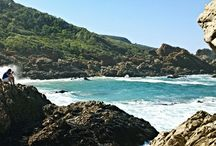 Coastal Conservation & Education Project / Situated in the beautiful Plettenberg Bay, the Coastal Conservation & Education Project focuses on practical habitat conservation, conservation education and marine conservation research.