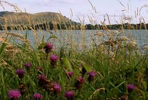 Scottish natural beauty / The wonderful stuff on our door step