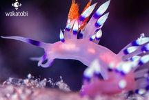 Indonesia - Wakatobi /  fondali , regno della biodiversità non sono stati rovinati da pratiche di pesca invasive e sono un trionfo di barriere coralline, pareti, cavità. Le immersioni vanno da immersioni in corrente, incontri con macro, esplorazione di reef. I punti di immersione già mappati sono circa 50. Difficile quindi esplorarli tutti in un solo soggiorno!