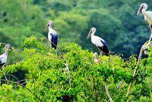 THUNG NHAM – ÖKOLOGISCHER VOGELPARK / Wenn Sie eine Reise nach Vietnam machen, sollen Sie Thung Nham Vogelpark besuchen. Das Ökotourismus – Vogelschutzgebiet Thung Nham Obstgarten ist von Ninh Binh Stadt ca.