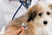 Bloat in Dogs! Medical  Emergency / How to prevent bloat or recognize it when it happens to your large breed dog. A medical emergency.  Take your dog to vet immediately.