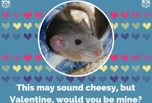 Animal Valentines / An assortment of valentines featuring some of our favorite Nature Museum critters.