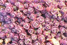 入賞作品『自慢の多肉植物・サボテンのフォトコンテスト』 / http://greensnap.jp/contest/38