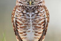 OWLS!!! ♥ / by Crystal Yates