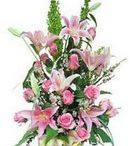 Send flowers to Bhavnagar /  These flowers is a rich and romantic way to create a memory which your dear one will always cherish for a memorable gift for occasion which are very dear to you like  anniversary, birthday and any other occasion. http://www.onlinedelivery.in/flowers-delivery-in-bhavnagar.aspx