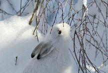 Animaux sous la neige ...