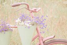 Bicycles / by jamie hahn